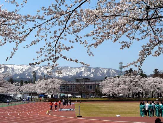 高田公園の桜(新潟県上越市)_d0066822_60051.jpg