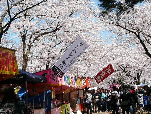 高田公園の桜(新潟県上越市)_d0066822_605597.jpg