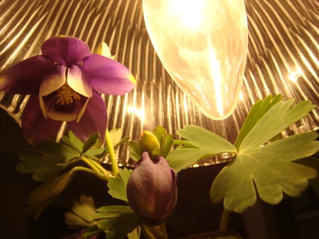 芽吹きに開花、、ケヤキショック_a0137727_1038793.jpg
