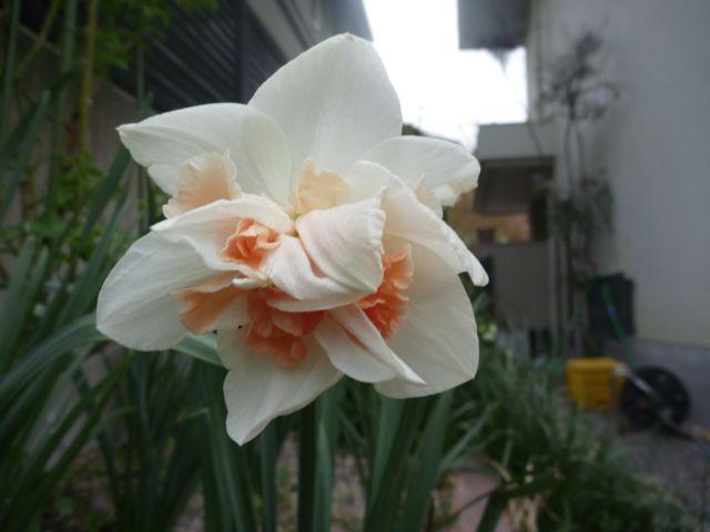 いろんな花咲いてきました_b0054727_1104616.jpg