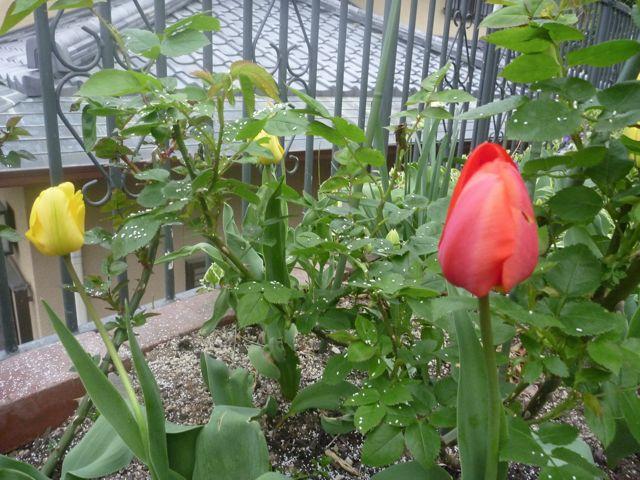 いろんな花咲いてきました_b0054727_1192954.jpg