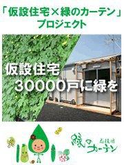 仮設住宅×緑のカーテン_d0004728_17523772.jpg