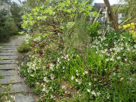 ドワーフコンフリー・ヒッドコートブルーは初々しく咲く!_f0139333_2154145.jpg