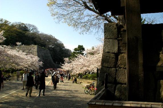 和歌山城散策  _b0093754_23455131.jpg