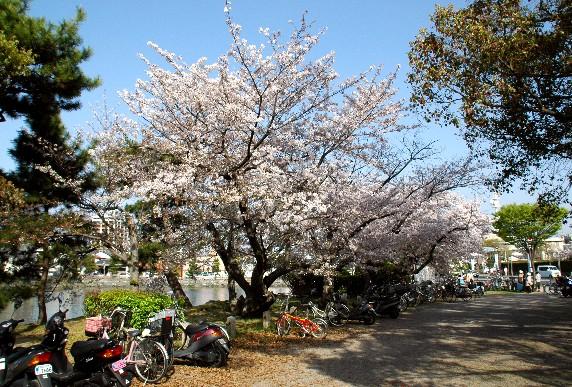 和歌山城散策  _b0093754_23455732.jpg