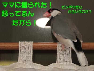 b0158061_2115342.jpg