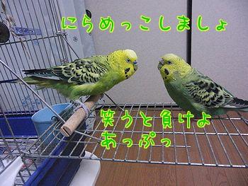 f0196665_2395064.jpg