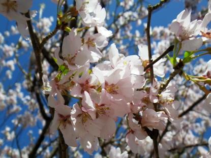 春の、そぞろパトロール_d0128167_0215813.jpg