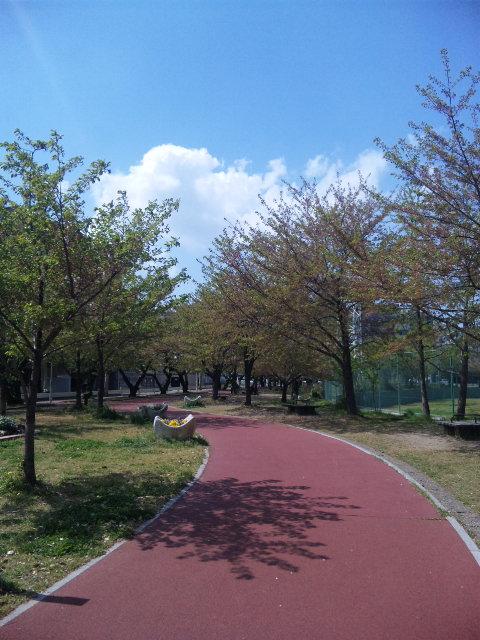 葉桜_a0077071_166227.jpg