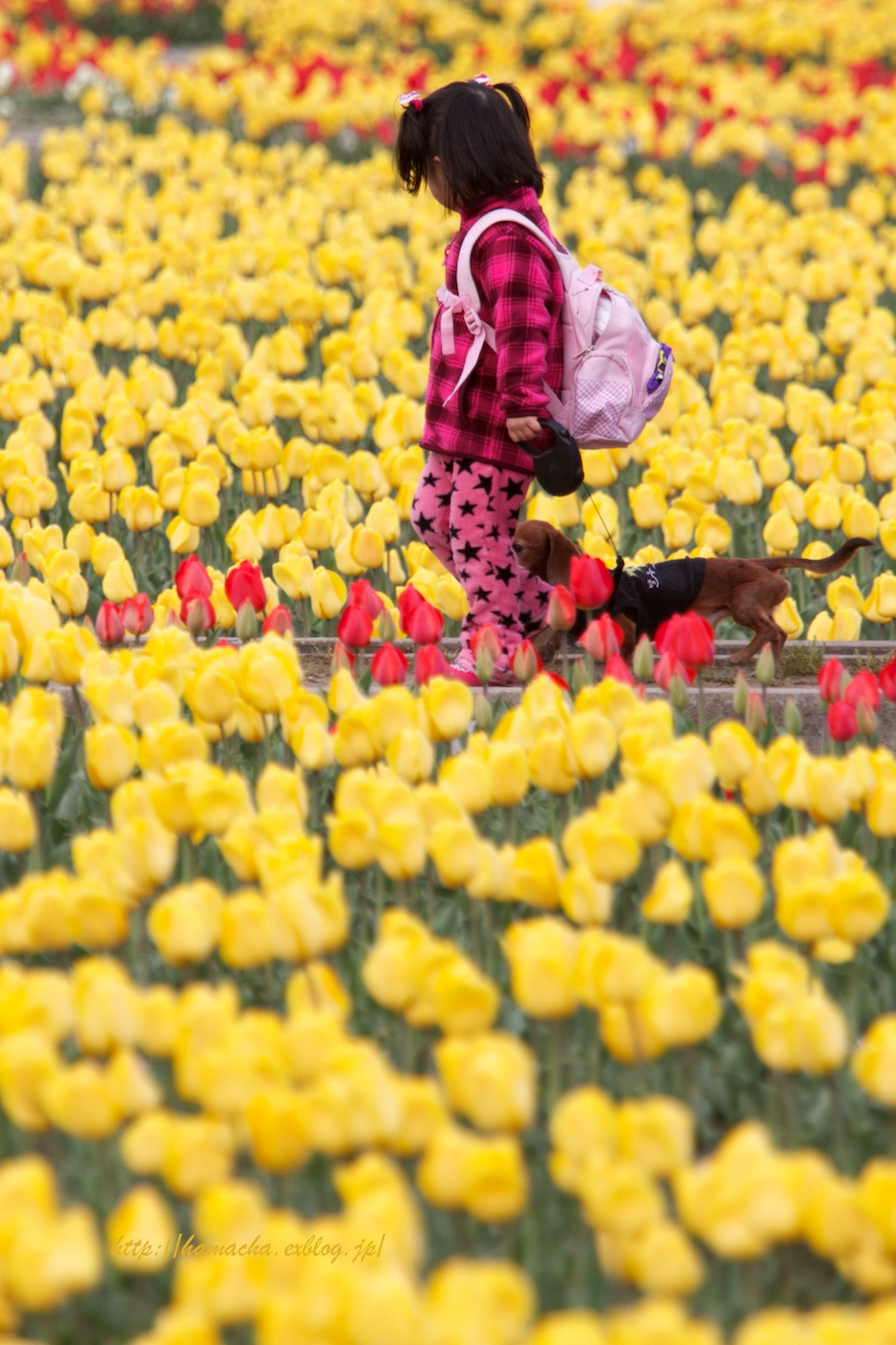 Flowers and Children_c0158775_20185974.jpg