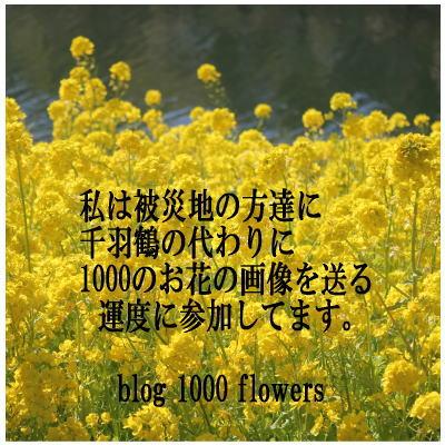 b0136683_9563225.jpg