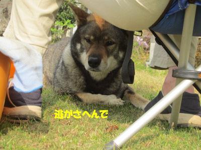 f0143123_20105393.jpg