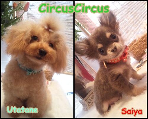 CircusCircus新作いーっぱい入荷中!!_b0084929_0231189.jpg