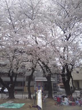 お花見!_f0214534_16311841.jpg