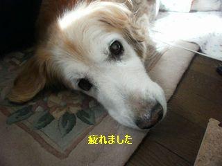 d0020136_14582172.jpg