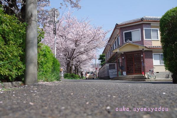 心の桜 疏水路_a0157263_22462166.jpg