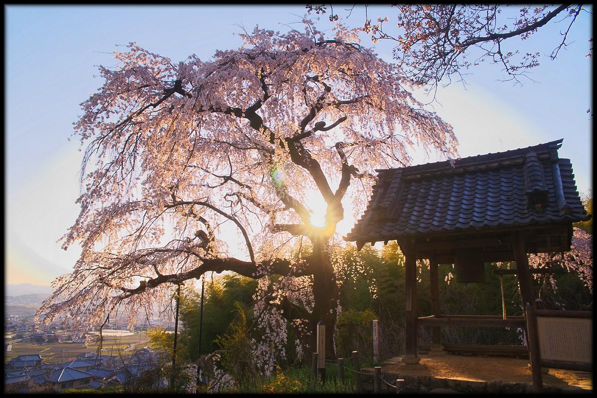 桜 2011 京都 <地蔵禅院>_f0021869_428824.jpg