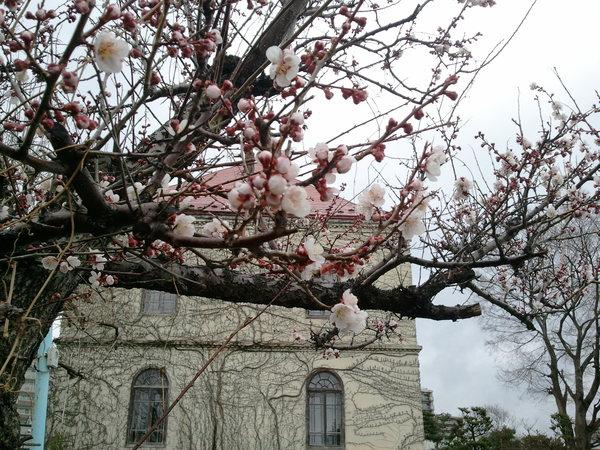 梅の花_a0141072_1975667.jpg