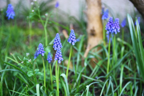 4月中旬の庭便り_d0129786_14315053.jpg