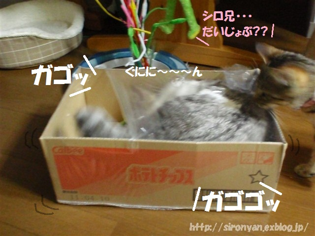 a0159490_1542483.jpg