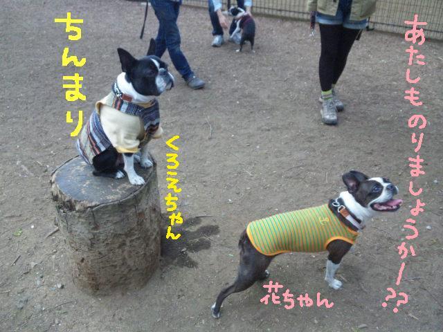 代々木公園に7白黒集合★_d0187891_15465411.jpg