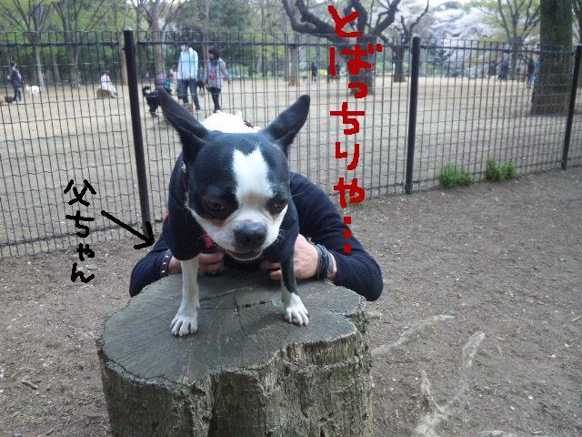 代々木公園に7白黒集合★_d0187891_15471986.jpg