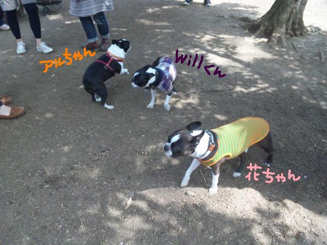 代々木公園に7白黒集合★_d0187891_15473669.jpg