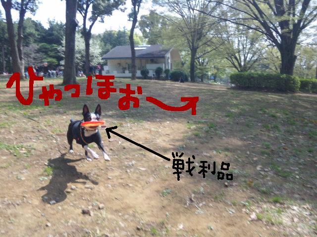代々木公園に7白黒集合★_d0187891_15491414.jpg