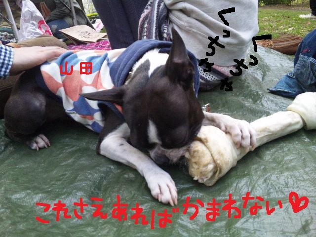 代々木公園に7白黒集合★_d0187891_15493014.jpg