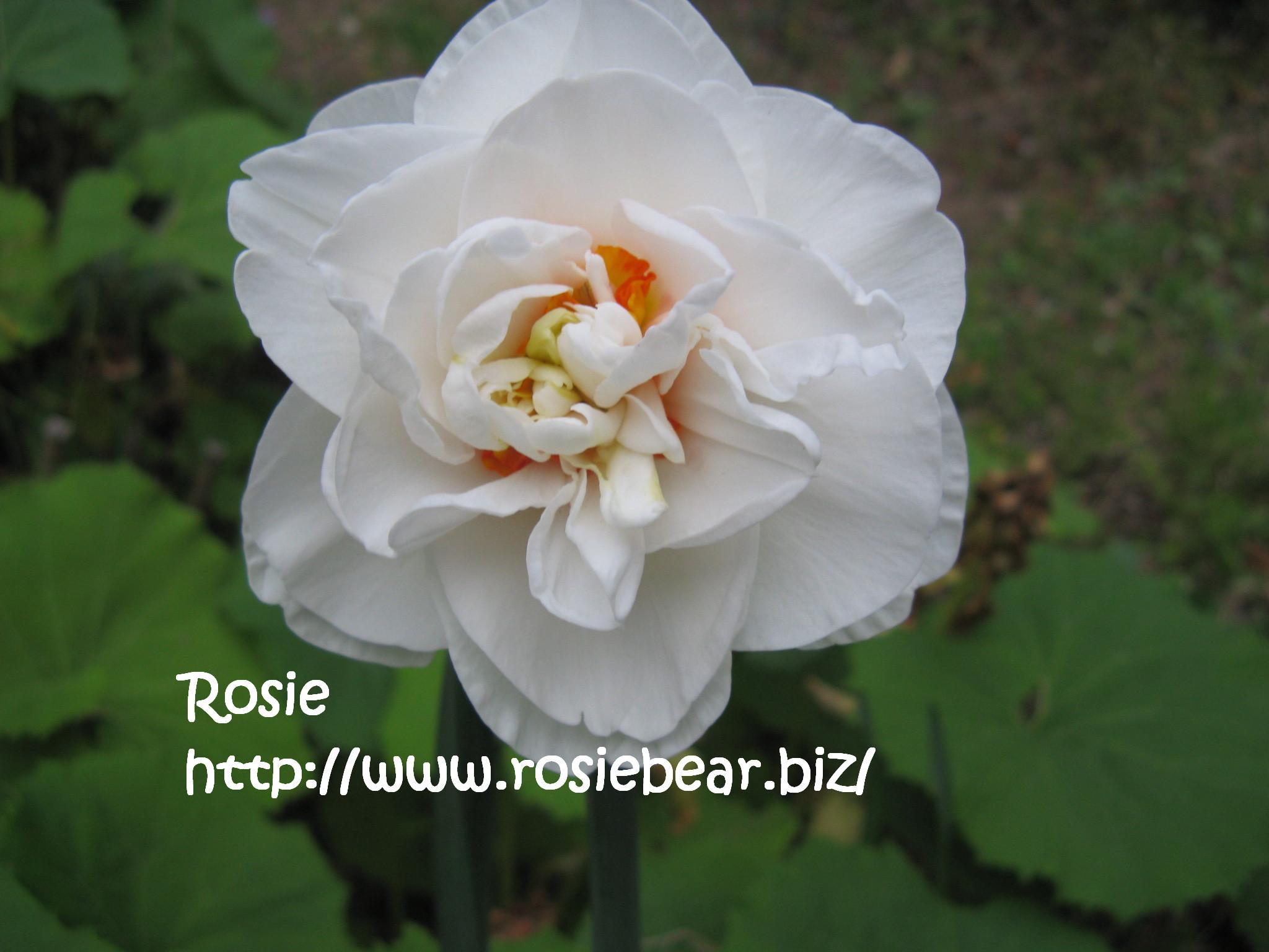 b0032098_11561945.jpg