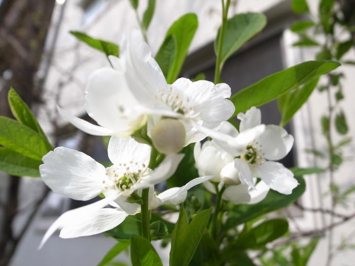 急ぎ足で咲く花たち_f0223603_12263279.jpg