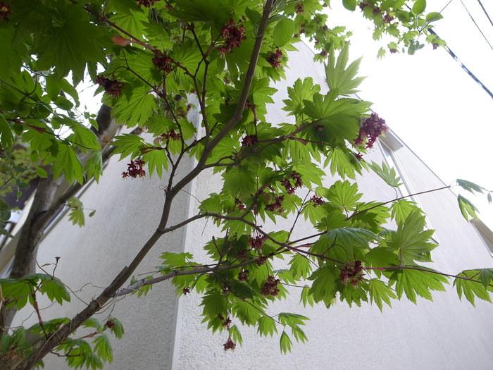 急ぎ足で咲く花たち_f0223603_12265796.jpg