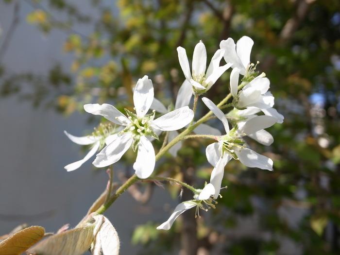 急ぎ足で咲く花たち_f0223603_12275177.jpg