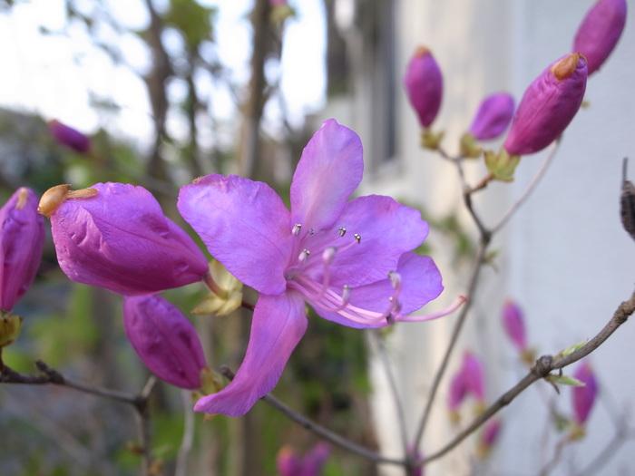 急ぎ足で咲く花たち_f0223603_12283350.jpg