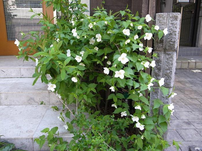 急ぎ足で咲く花たち_f0223603_12292968.jpg