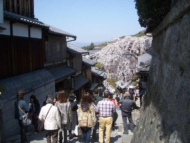 京都花見旅行2_a0047004_14415423.jpg