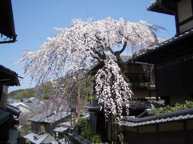 京都花見旅行2_a0047004_14502650.jpg