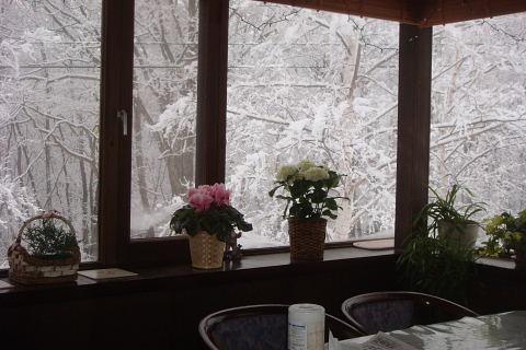 4月20日 水曜  2度 小雪_f0210811_823796.jpg