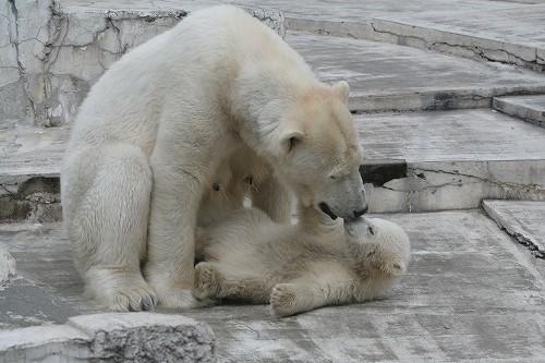 ララと赤ちゃん♪ その3_c0048117_12386100.jpg