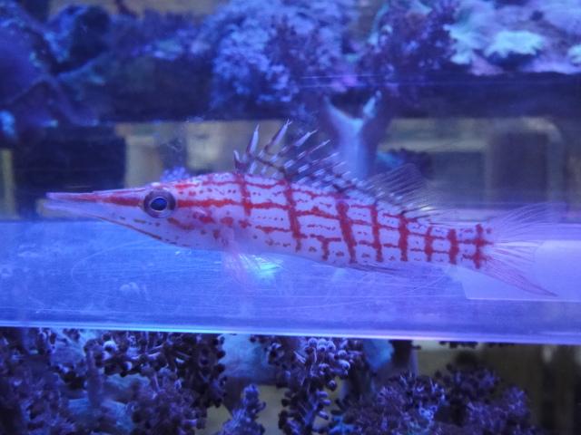 海水魚・サンゴ・水草・淡水魚_f0189122_12594767.jpg