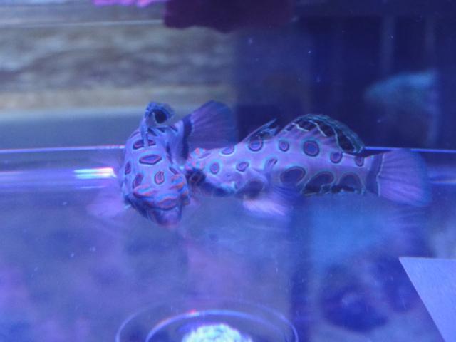 海水魚・サンゴ・水草・淡水魚_f0189122_131139.jpg