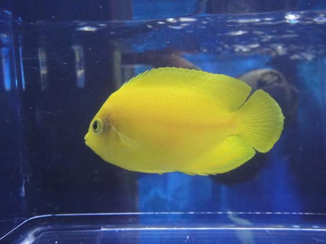 海水魚・サンゴ・水草・淡水魚_f0189122_1352034.jpg