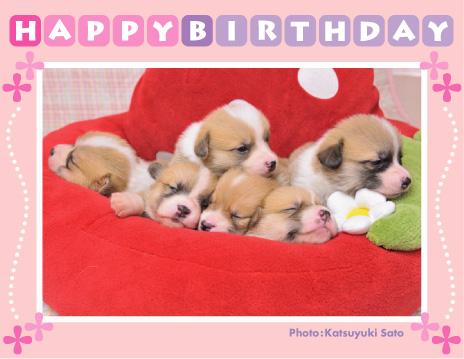 アンナベビーちゃん、お誕生日おめでとう♪_d0102523_2185965.jpg
