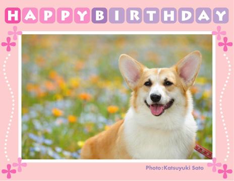 アンナベビーちゃん、お誕生日おめでとう♪_d0102523_2192555.jpg