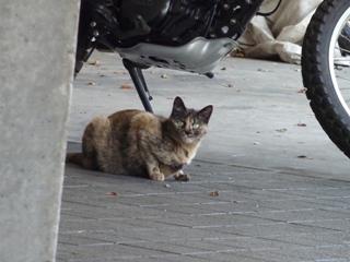 そと猫のお友だち マーブルちゃん編。_a0143140_23365814.jpg