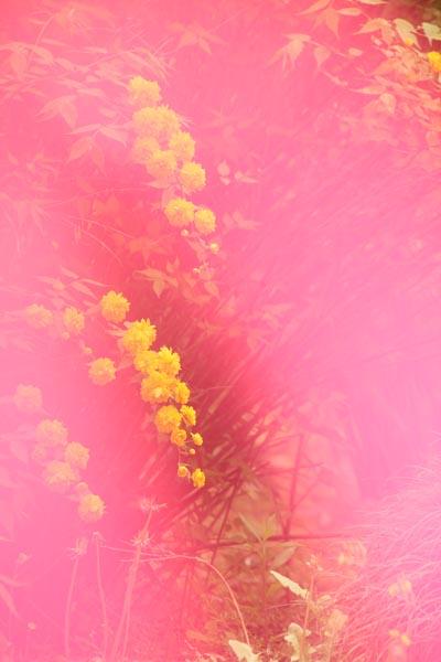 春の歌_f0159642_2575421.jpg