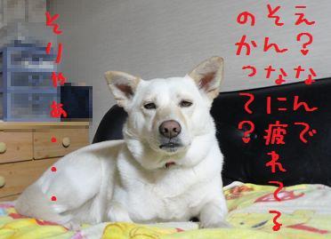 f0195543_2213970.jpg