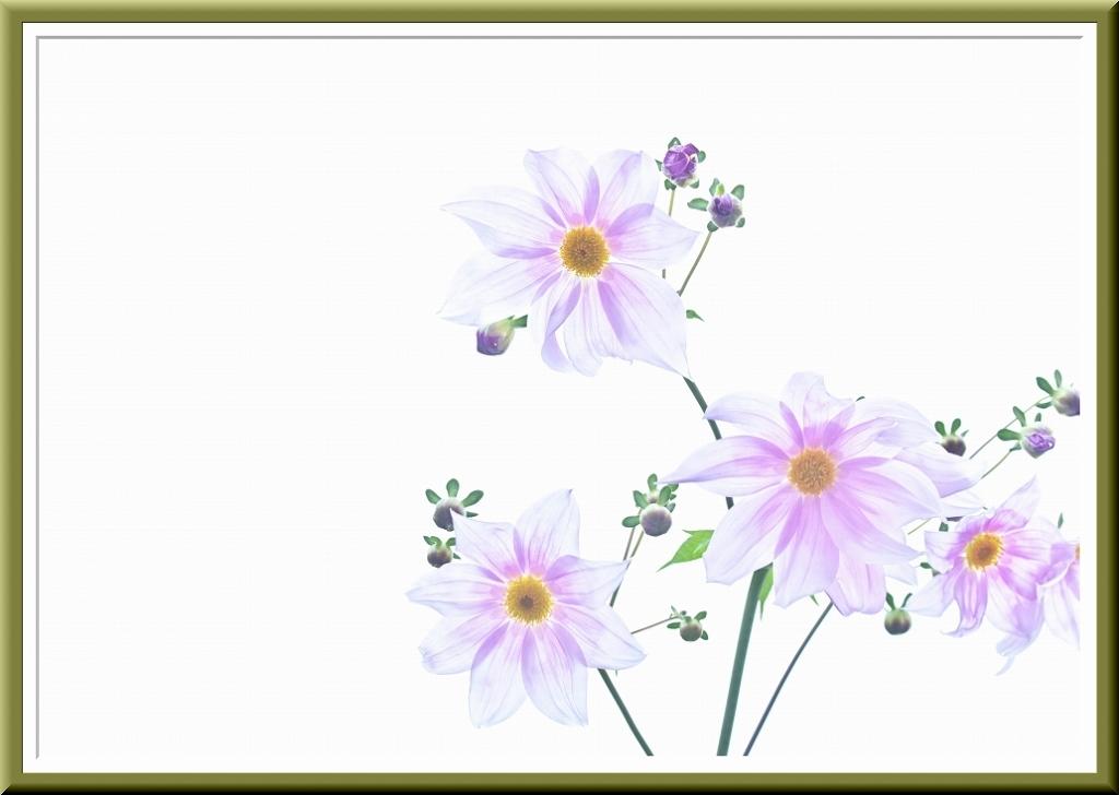 PHOTO TECHNIC DIGITAL 2011.5_f0018464_201364.jpg