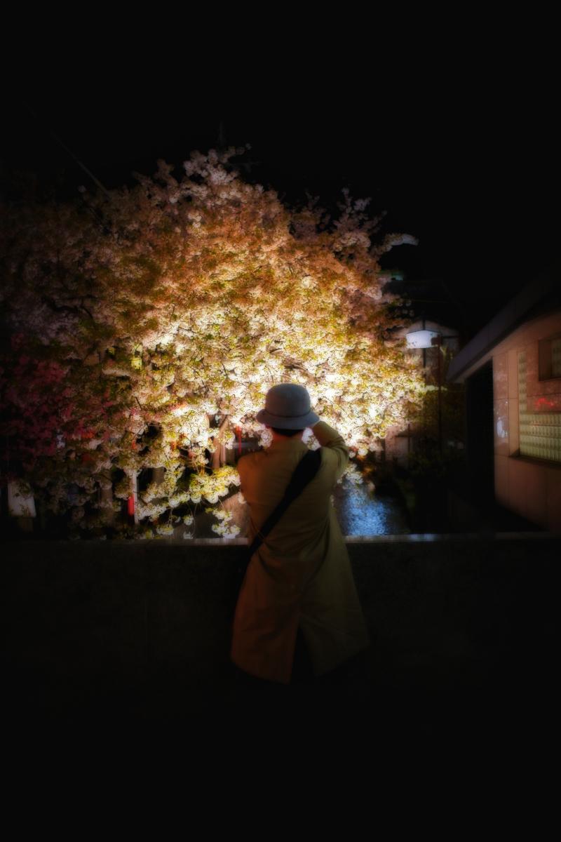 桜 2011 京都 _f0021869_0255231.jpg