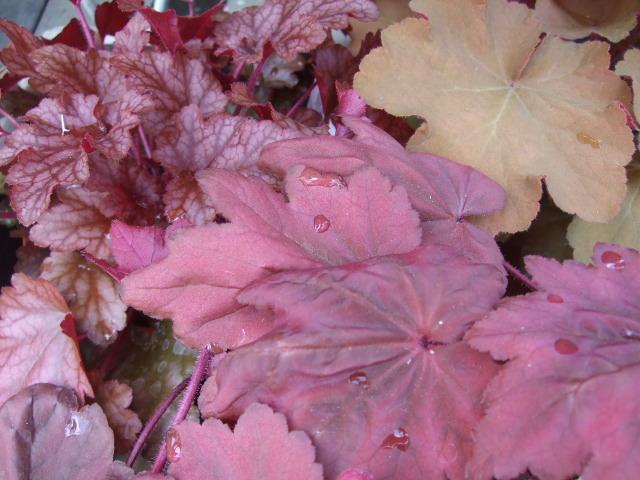オークリーフ(入口には花水木を・・)_f0049672_14521391.jpg